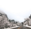 Winter driving: stay safe on the roads